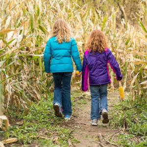 Two Young Girls Walking Through Corn Maze in Minneapolis-Saint Paul in the Fall