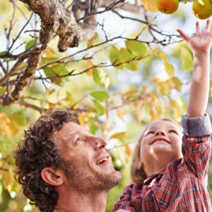 Father and daughter pick apples.